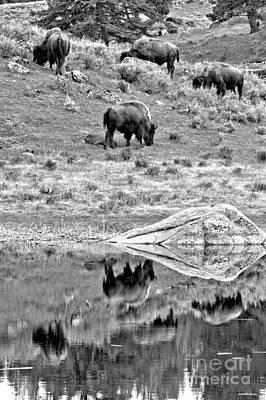 Photograph - Yellowstone Bison Hillside Reflections Black And White by Adam Jewell