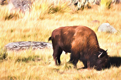 Photograph - Yellowstone Bison by Lana Trussell
