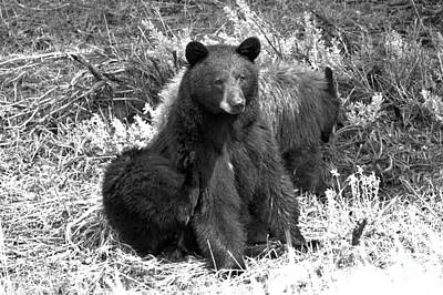 Photograph - Yellowstone Black Bear And Junior Spring 2018 Black And White by Adam Jewell
