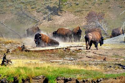 Yellowstone Buffalo- Fine Art Photograph Art Print by Greg Sigrist