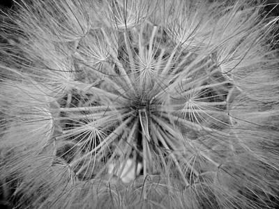 Photograph - Yellowstone Dandelion by Jonathan Hansen