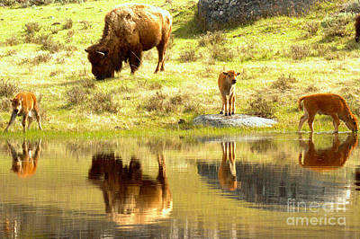 Photograph - Yellowstone Drinking And Dining by Adam Jewell