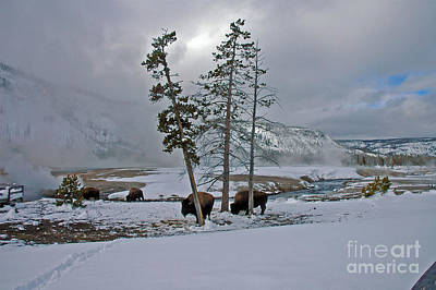 Photograph - Yellowstone In Winter by Cindy Murphy - NightVisions