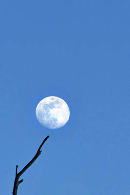 Photograph - Yellowstone Moon by Jeff Brunton