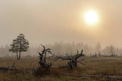 Photograph - Yellowstone - Morning Fog by Penny Meyers