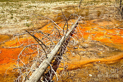 Photograph - Yellowstone Orange Bacterial Mat by Adam Jewell