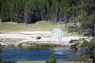 Beach Landscape Mixed Media - Yellowstone Park Bison In August by Thomas Woolworth