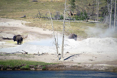 Beach Landscape Mixed Media - Yellowstone Park Bisons In August by Thomas Woolworth