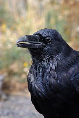 Yellowstone National Park Photograph - Yellowstone Raven by Benjamin DeHaven