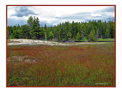 Photograph - Yellowstone Red Grass by Joan  Minchak