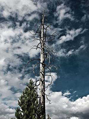 Photograph - Yellowstone Sky by Mary Capriole