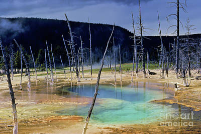 Photograph - Yellowstone Thermal Pool by Kevin McCarthy