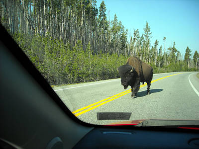 Photograph - Yellowstone Traffic Can Be Dangerous by George Jones