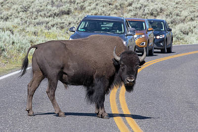 Photograph - Yellowstone Traffic Cop by Phil Stone