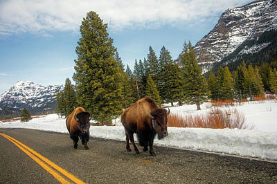 Photograph - Yellowstone Traffic by L O C