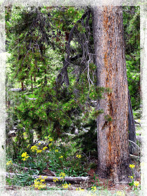 Photograph - Yellowstone Tree by Joan  Minchak