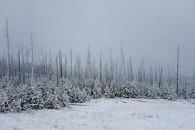Photograph - Yellowstone Winterscape by Marilyn Burton