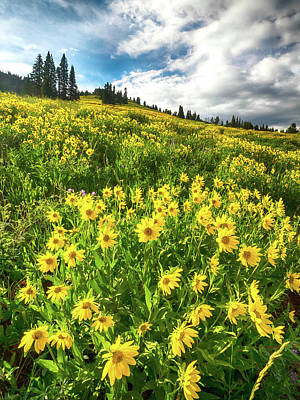 Photograph - Yellowstone Yellow by Rob Wilson