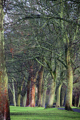 Photograph - Yes It's Trees But U K Trees Home by Jez C Self