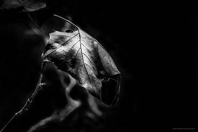 Photograph - Yet Beauty Will Move On by Denise Dube