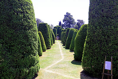 Photograph - Yew Tree Garden by Tony Murtagh
