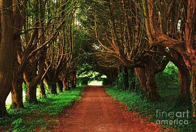 Yew Tree Lane At Killruddery House Art Print