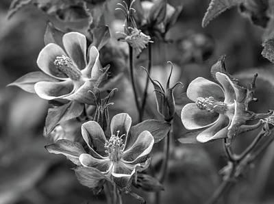Yippee...spring - Bw Art Print by Steve Harrington