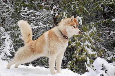 Photograph - Yoga Dog by Lynda Hoffman-Snodgrass