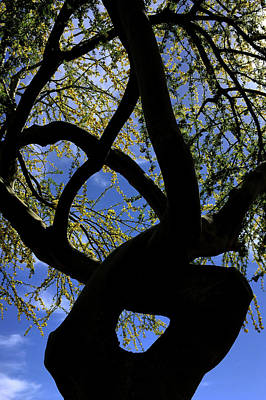 Wall Art - Photograph - Yoga Tree by Reed Rahn