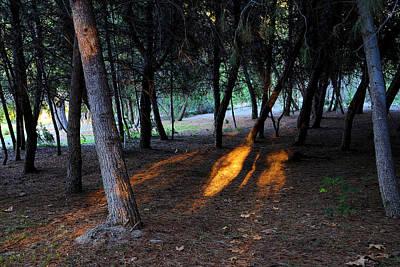 Photograph - Yorba Regional Park by Viktor Savchenko