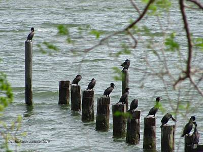 Photograph - York River Cormorants by Jennie  Richards