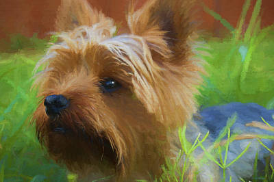 Painting - Yorkie In The Grass - Painting by Ericamaxine Price