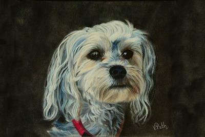 Pastel - Yorkie Maltese Puppy by Vicky Path