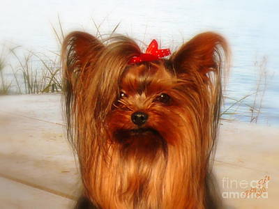 Yorkie Princess Art Print