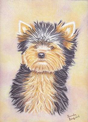 Pastel - Yorkie Puppy by Brenda Bonfield