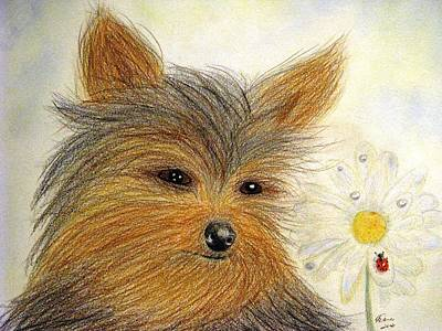 Gerbera Drawing - Yorkie Summer Fun by Angela Davies