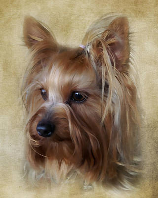 Photograph - Yorkie Terrier Portrait by TnBackroadsPhotos