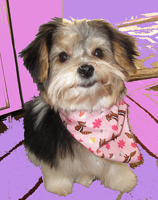 Photograph - Yorkie With Bandana by Barbara McDevitt