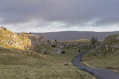 Owls - Yorkshire Dales - 9 by Chris Smith