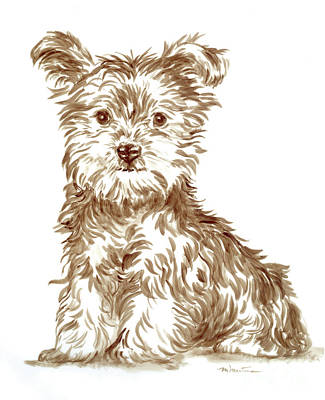 Drawing - Yorkshire Puppy by Meridith Martens