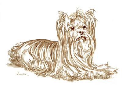 Drawing - Yorkshire Terrier 1 by Meridith Martens