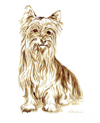 Drawing - Yorkshire Terrier 2 by Meridith Martens