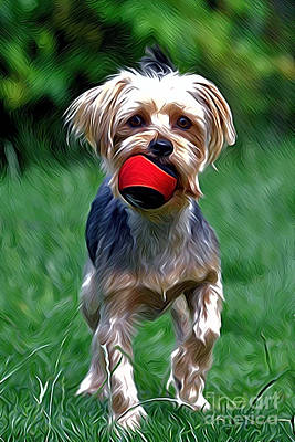 Photograph - Yorkshire Terrier by Andrew Michael