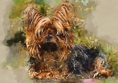 Photograph - Yorkshire Terrier by Ericamaxine Price