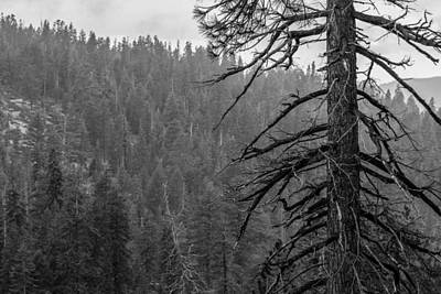 Photograph - Yosemite  by Christopher Perez