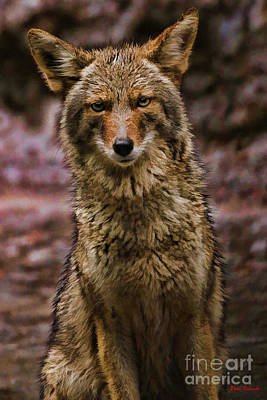 Photograph - Yosemite Coyote by Blake Richards