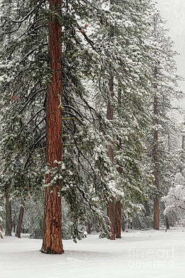 Photograph - Yosemite Guardians In Snow Storm by Tibor Vari