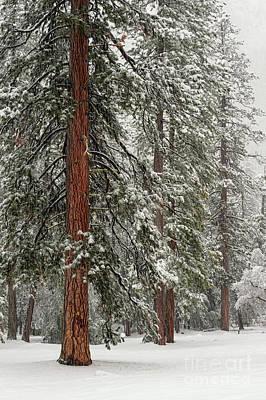 Photograph - Yosemite Guardians In Snow Storm by Tibor Vari