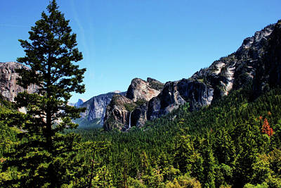 Photograph - Yosemite National Park by Judy Vincent