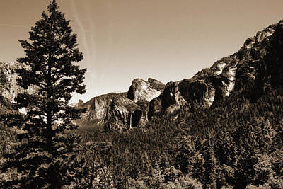 Photograph - Yosemite National Park Sepia by Judy Vincent